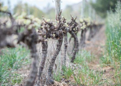 Klue Wines-2 (Large)